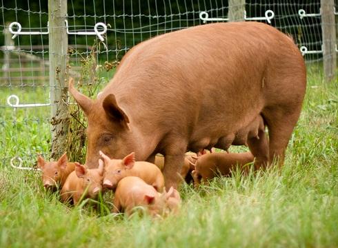 farm_animal_landing_page_photo